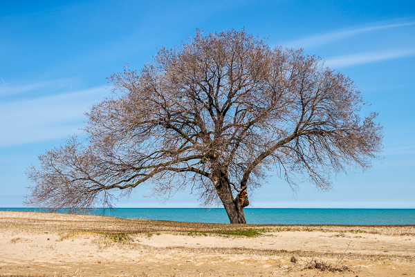 Spring Tree on Lake Michigan in Chicago